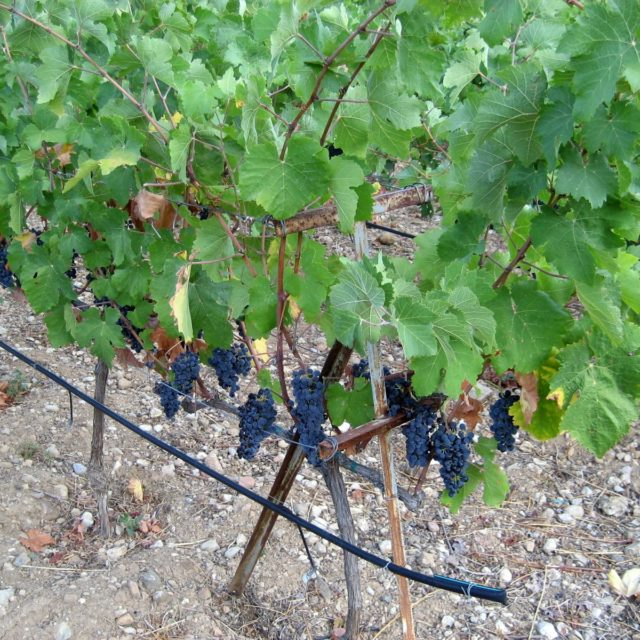 Aigeira - Wine - Agiorgitiko