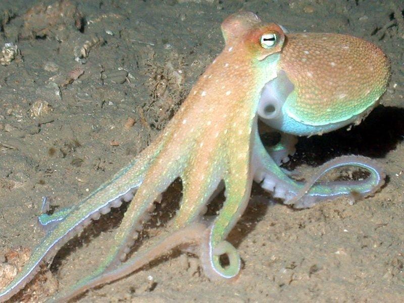 Aigeira - Activities - Fishing - Octopus