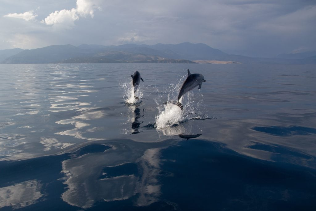 Jumping dolphins in Gulf of Corinth, OceanCare